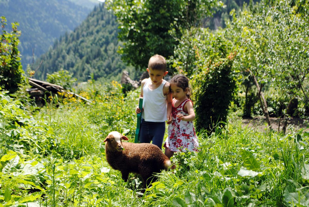Осетинское горное село, дети с овцами