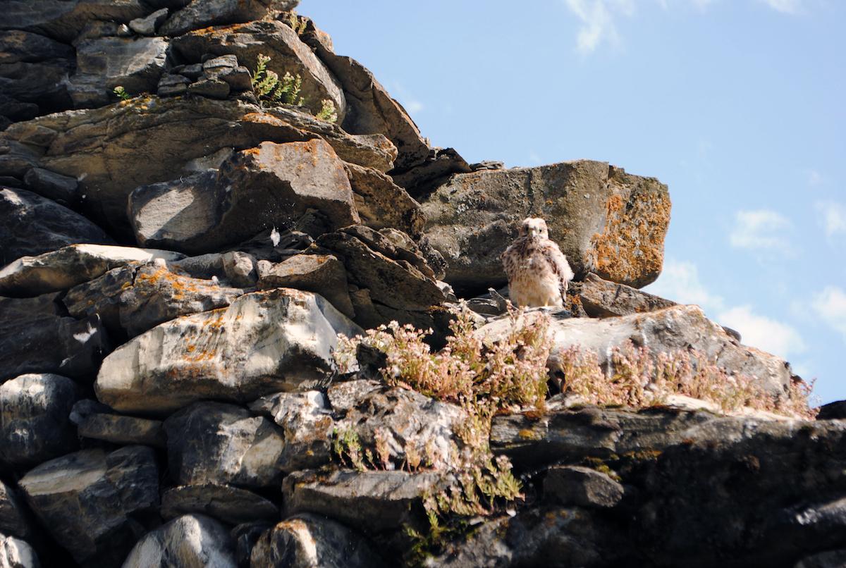 Осетинское горное село в Джавском районе в Южной Осетии, в развалинах сторожевых башен - гнезда орлов