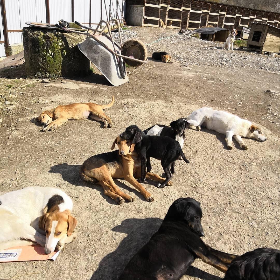 Бездомные собаки в Абхазии