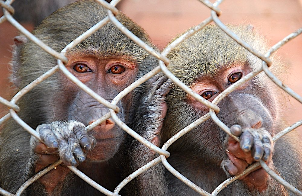 Monkey nursery in SukhumiОбезьяний питомник в Сухуме