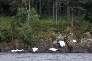 Массовый убийца Андерс Беринг Брейвик 23 июля 2011 года напал на молодежный летний лагерь на берегу острова Утоя в Норвегии и убил 69 молодых людей