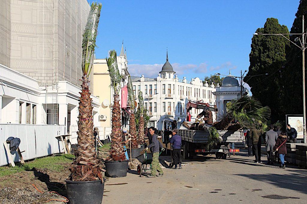 Пальмы на улице Сухуми