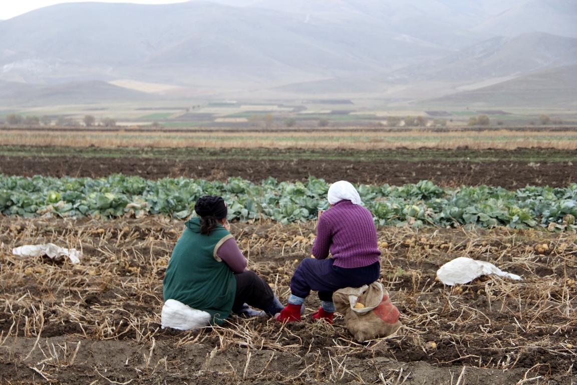 Армения, kartof, kartof sahələri, məhsul, qadınlar, ağır iş