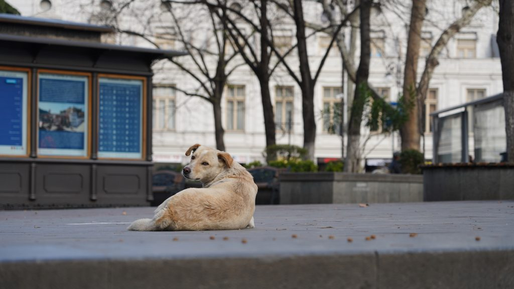 Georgia, stray animals. Tbilisi, April 2020. Photo: David Pipia, JAMnews