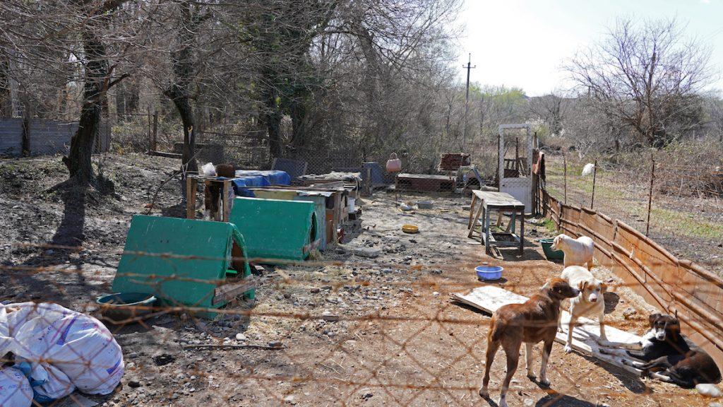 Georgia, stray animals.Photo: David Pipia, JAMnews