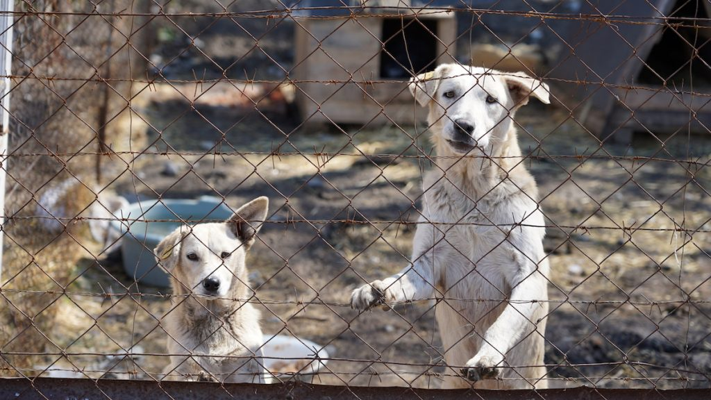 Georgia, stray animals. Photo: David Pipia, JAMnews