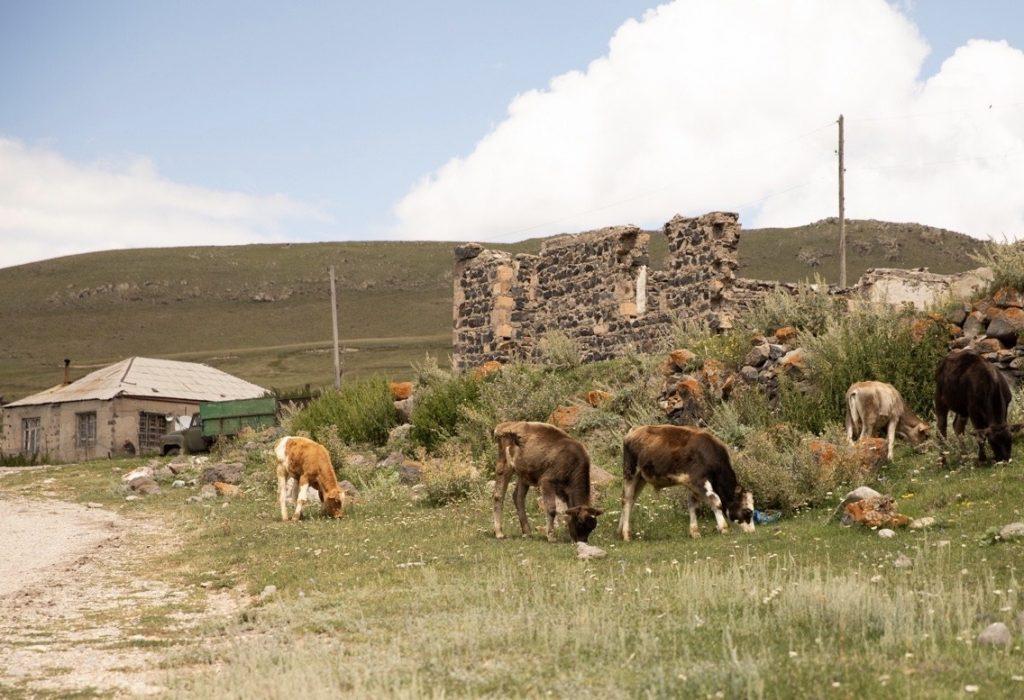 регионы Армении, миграция, закрытые границы, переезд в столицу, правительство, децентрализация населения, рождаемость, депопуляция,
