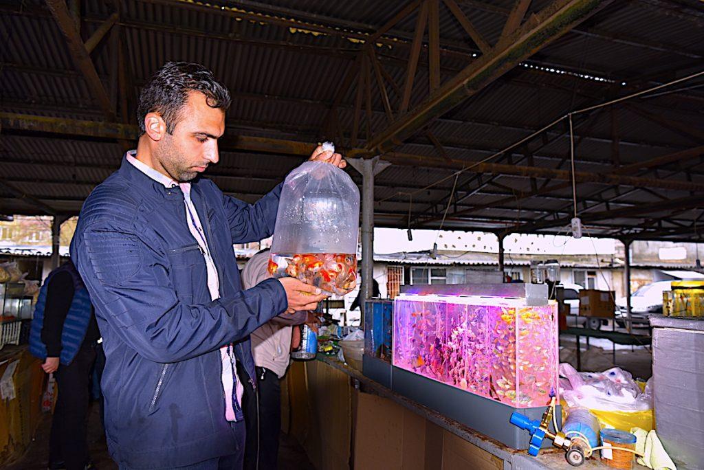 Վաճառում է ձկներ և ակվարիումային պարագաներ Ստեփանակերտում: 2021թ.  Ք. Երևան,  Արցախցի Արմենը երրորդ մասին կիրակնօրյա կենդանիների շուկայում: Վաճառում է ձկներ և ակվարիումային պարագաներ Ստեփանակերտում