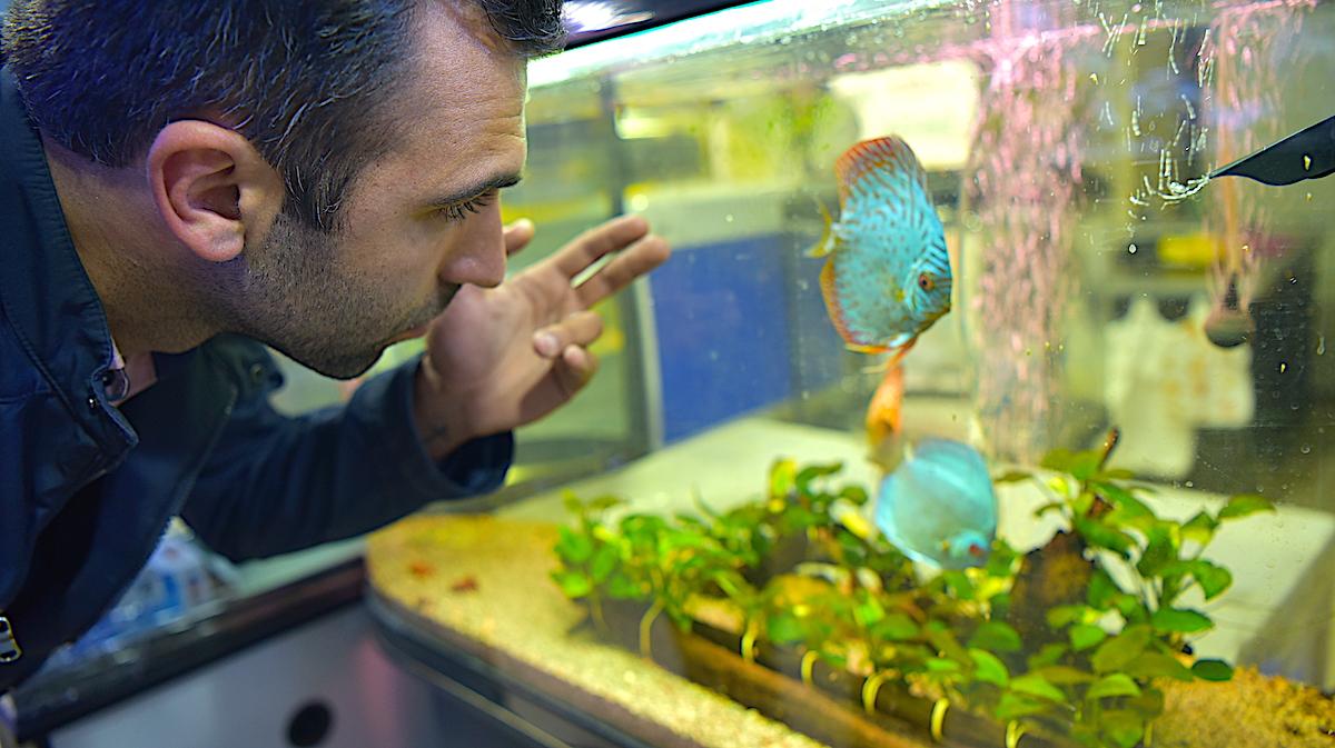 Stepanakertdə balıq və akvarium aksessuarları satır