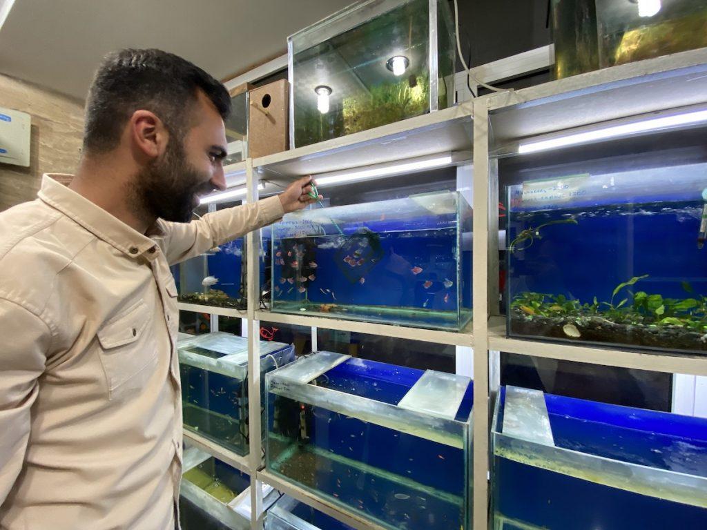Ստեփանակերտի իր խանութում տեղավորում է ձկնիկներին: Վաճառում է ձկներ և ակվարիումային պարագաներ Ստեփանակերտում