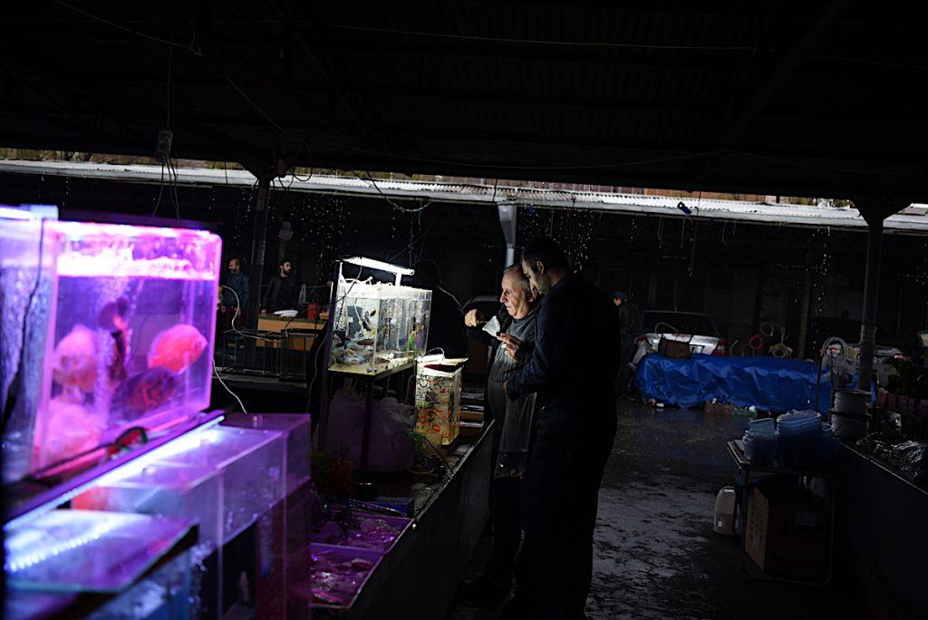 Վաճառում է ձկներ և ակվարիումային պարագաներ Ստեփանակերտում