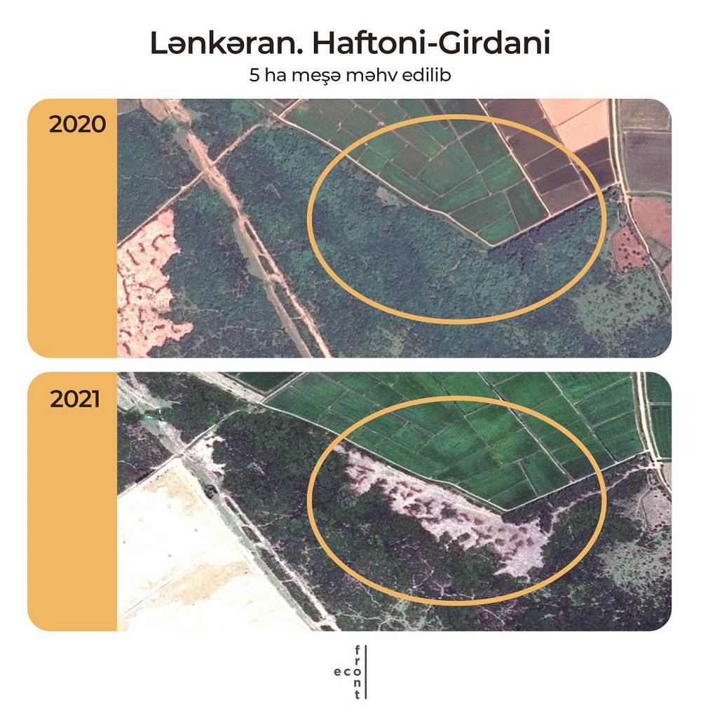 Azerbaijani authorities sold forest in the Lankaran region to tea producers
