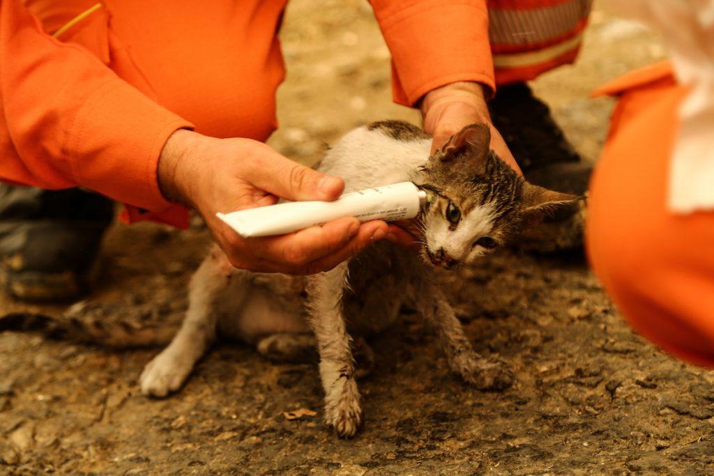 Волонтеры спасли котенка из лесного пожара недалеко от города Манавгат, к востоку от курортного города Анталия в Турция. 29 июля, 2021. REUTERS/Kaan Soyturk. Лесные пожары в Турции и террористы