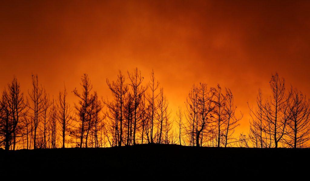 Сильный лесной пожар в 25 километрах от популярного курорта Анталия в Турции. 29 июля, 2021. REUTERS/Kaan Soyturk. Лесные пожары в Турции и террористы